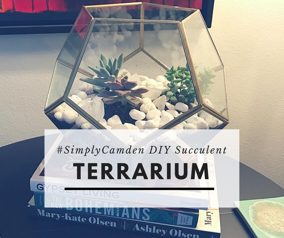 Diy succulent terrarium colette laporte for Michaels craft store tampa