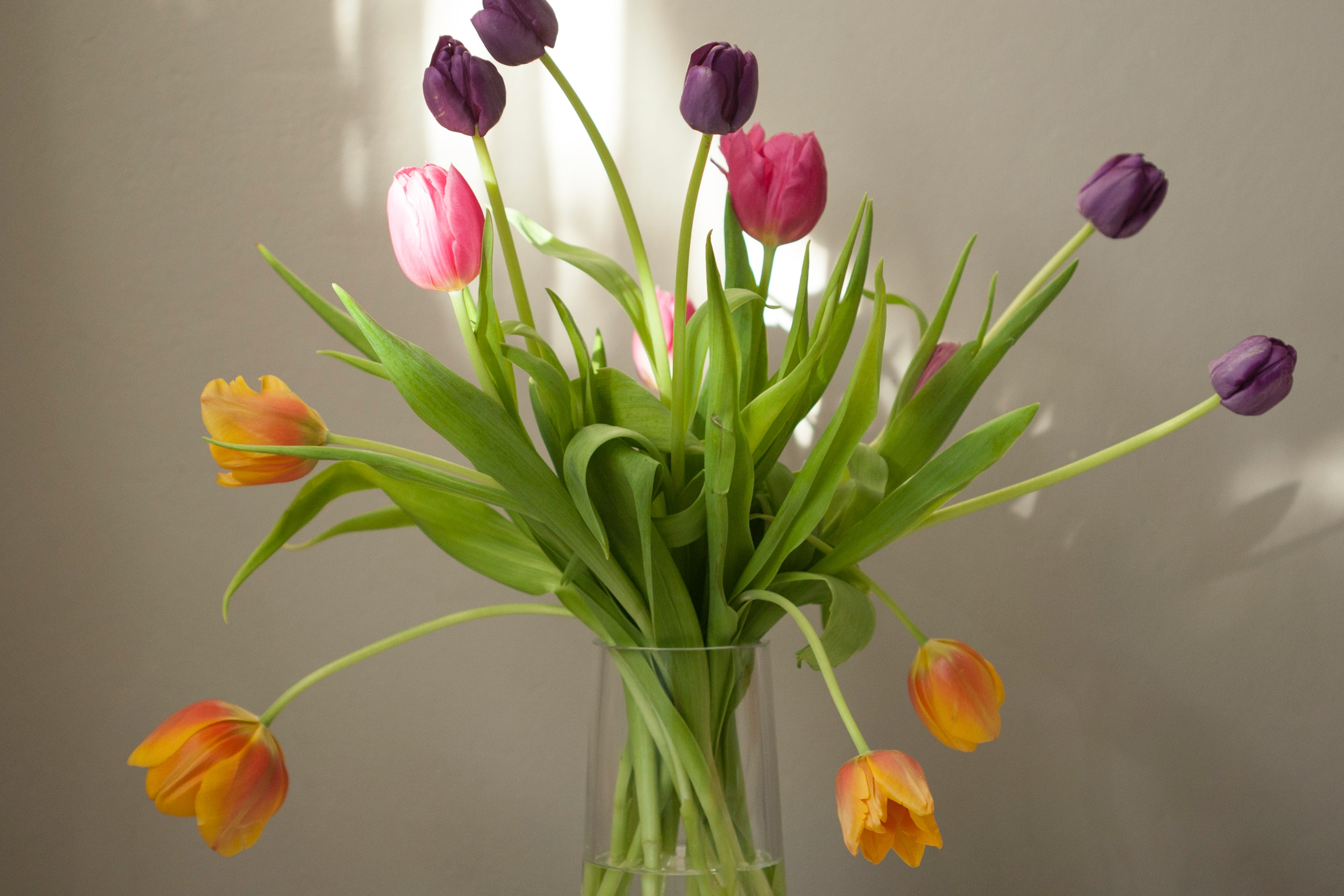 tulips-spring-flowers-decor