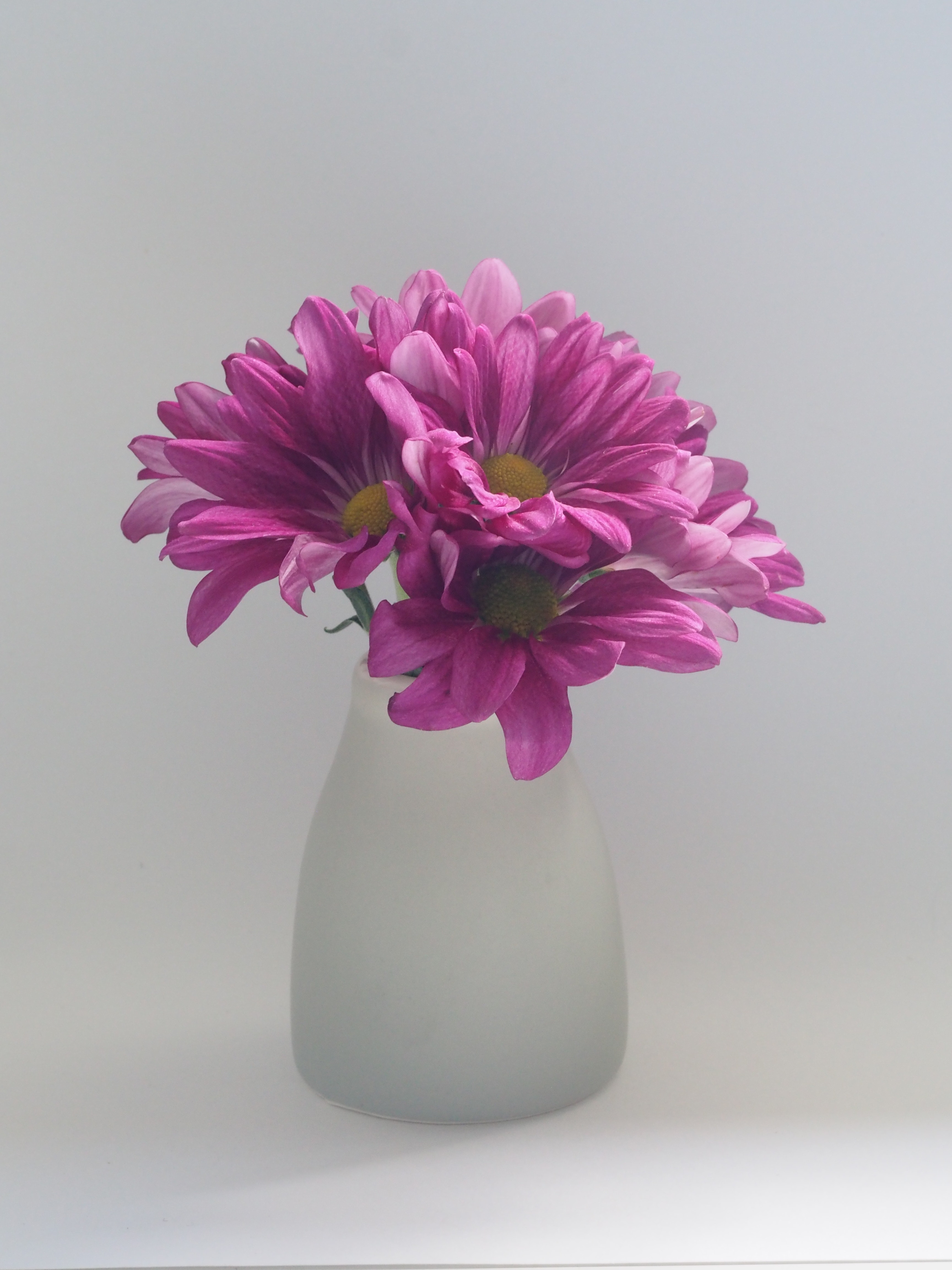 daisy-spring-flower-decor