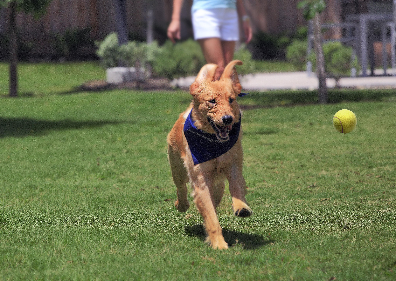 Dog playing at dog park at Camden Lamar Heights apartments in Austin, TX