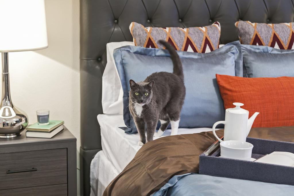 camden-landmark-apartments-ontario-ca-pet-friendly.jpg