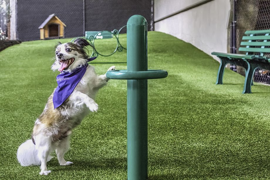 """Fido says """"I won't go!"""" unless there's a dog park. Photo by Camden"""