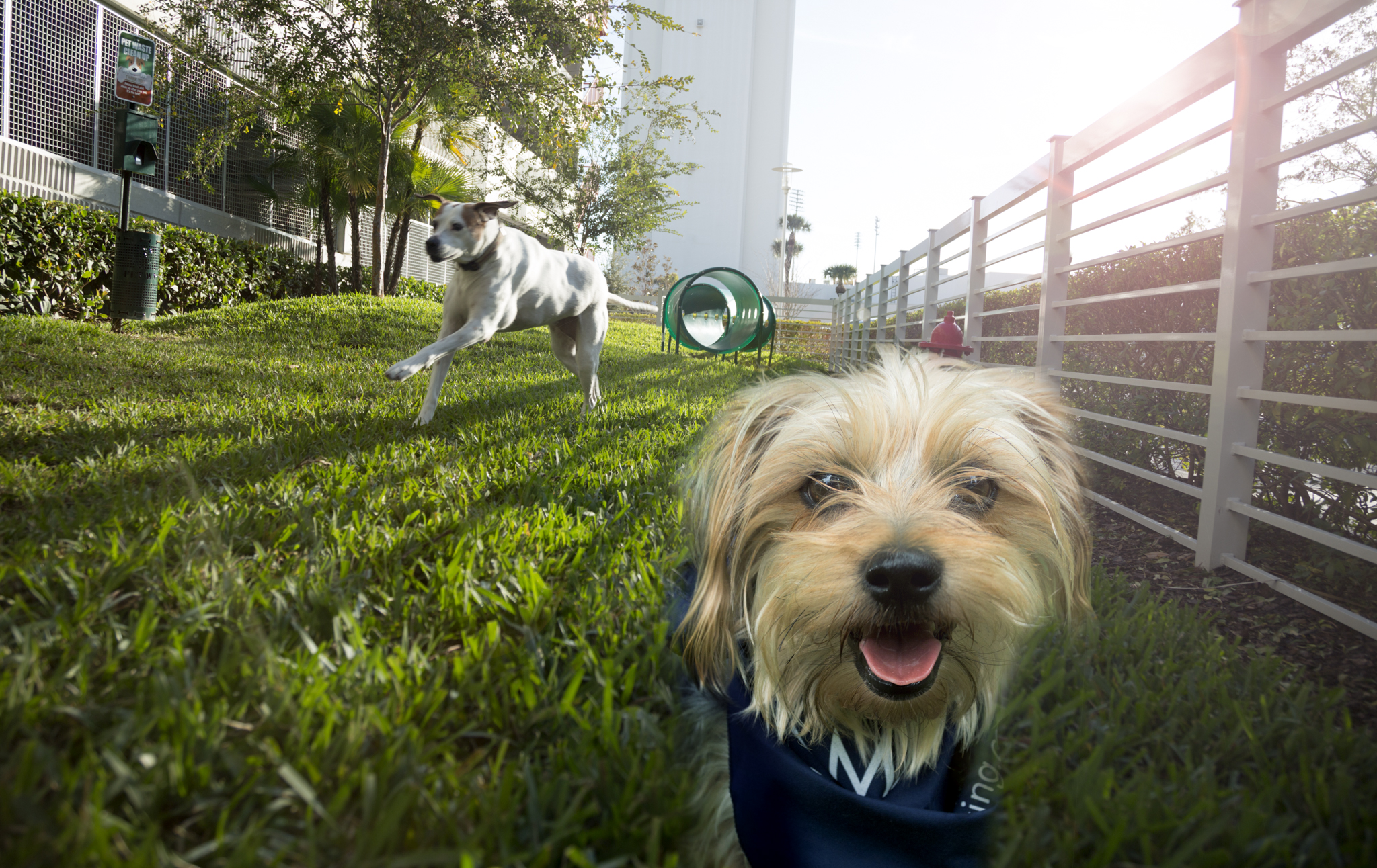 dog-owner-camden-pier-district-apartments-st_petersburg-florida-dog-park