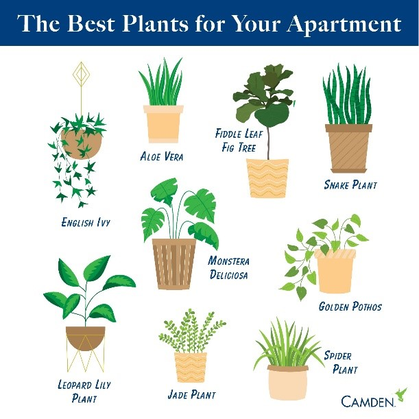 camden_apartment_plant_ideas.jpg