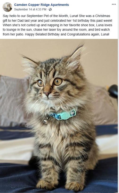 Luna, kitten from Copper Ridge, Pet of the Month winner