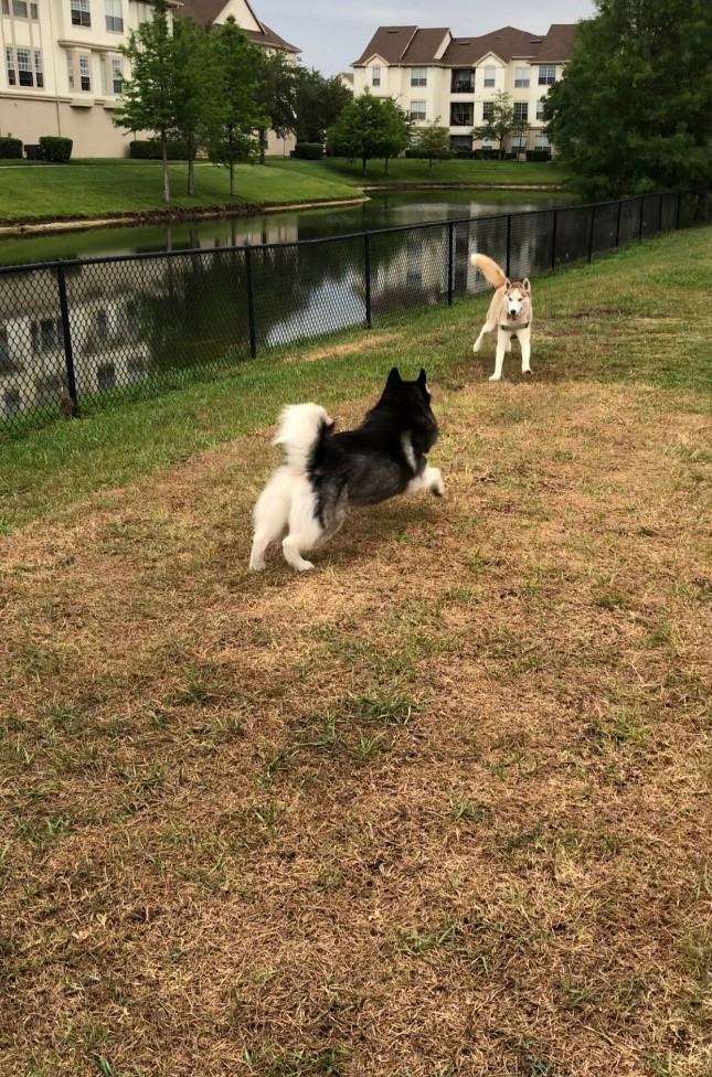 Dogs Playing in the Dog Park