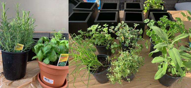 easy apartment herb garden plants