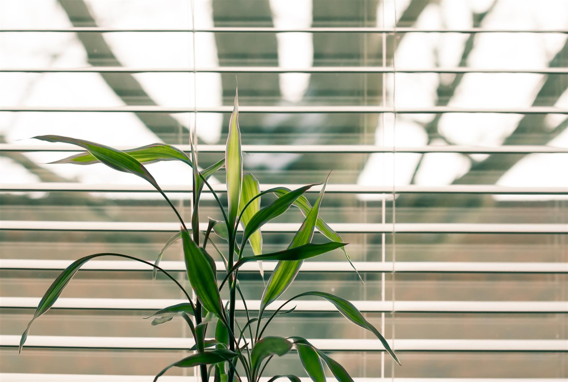 Sunny Day_Energy-Saving Ways To Warm Your Apartment This Winter