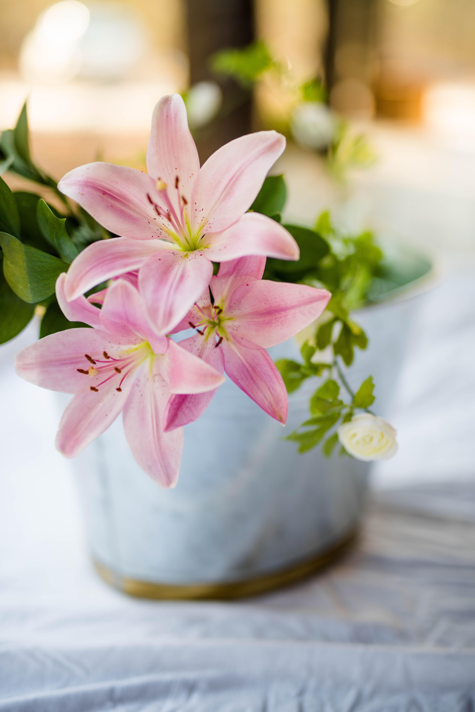 stargazer-lilly-spring-flowers-decor