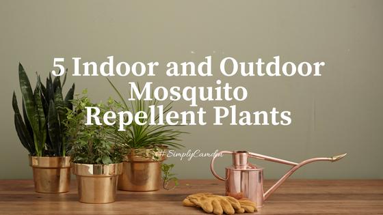 5 Indoor And Outdoor Mosquito Repellent Plants Camdenliving Com