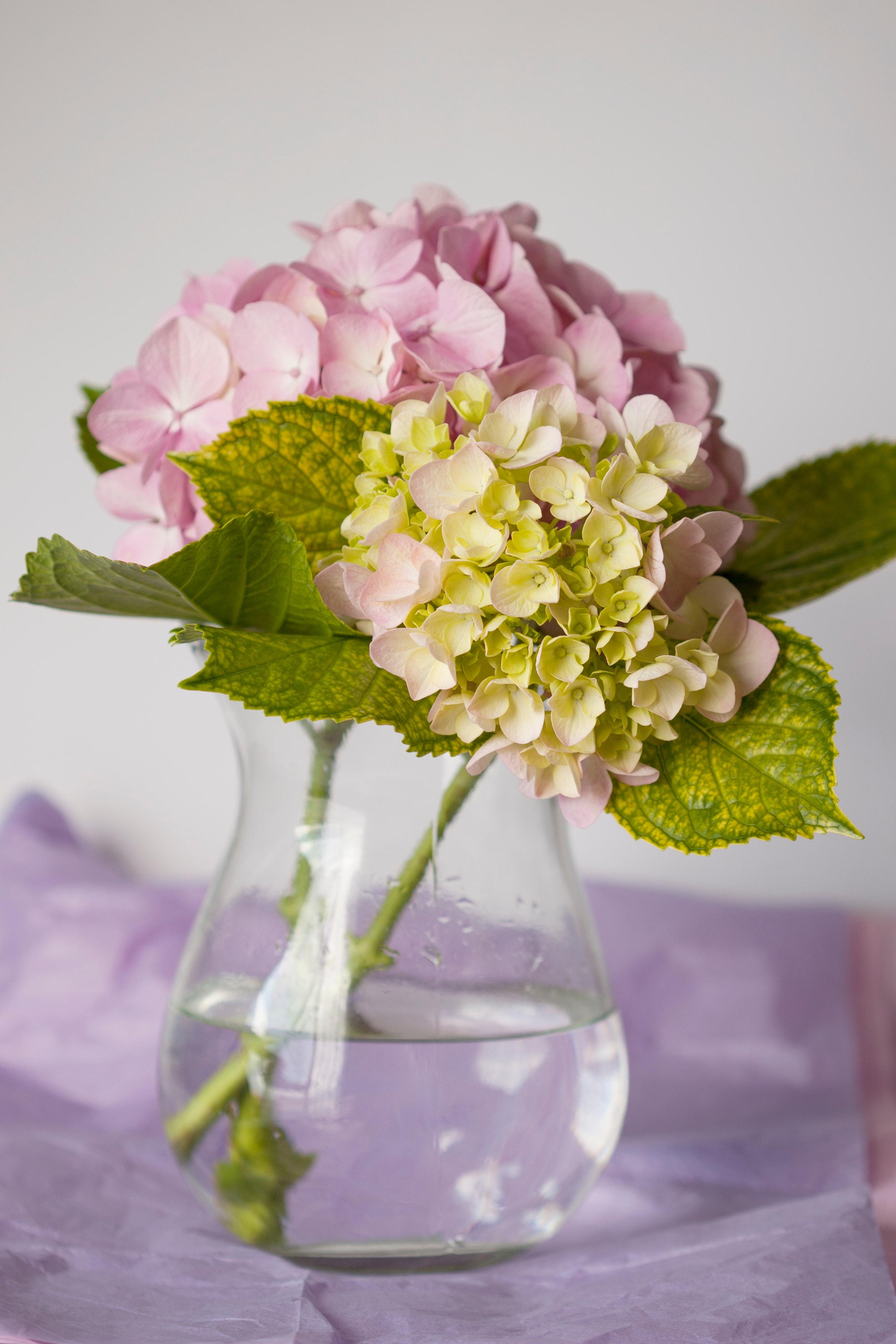 Hydrangeas in a lovely vase