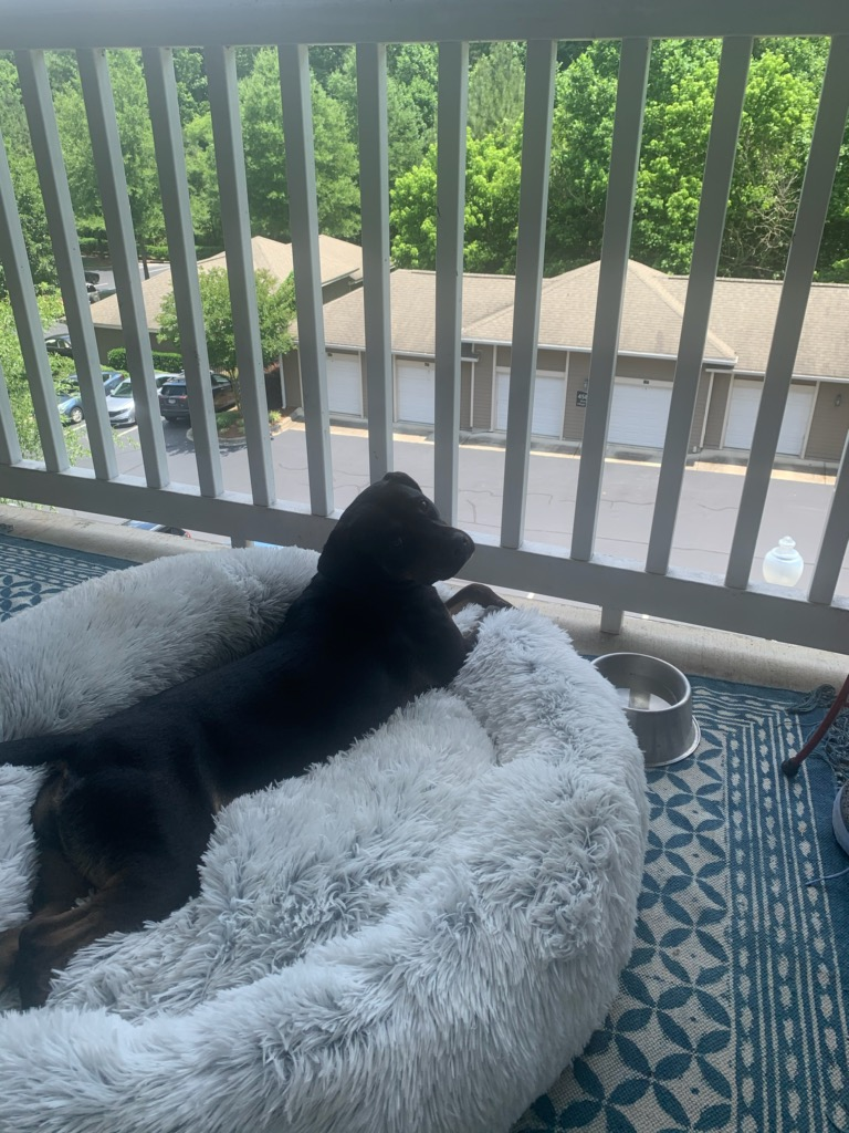 Dog laying on porch in cozy bed