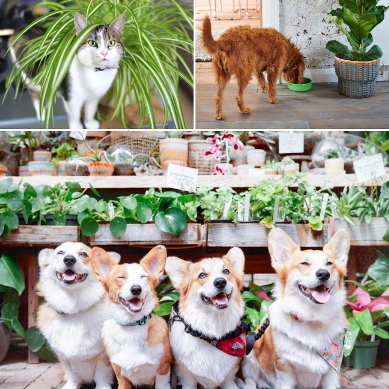 Collage of Pet Friendly Plants