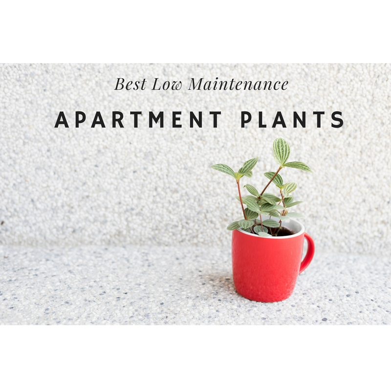 Best low maintenance apartment plants for Low maintenance summer plants