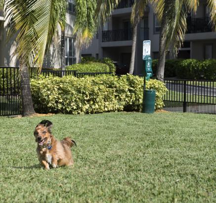 Camden Aventura Apartments Dog Park in Aventura, FL