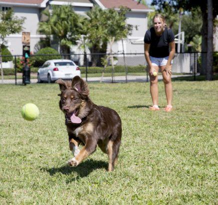 Camden Bay Apartments in Tampa, FL dog park