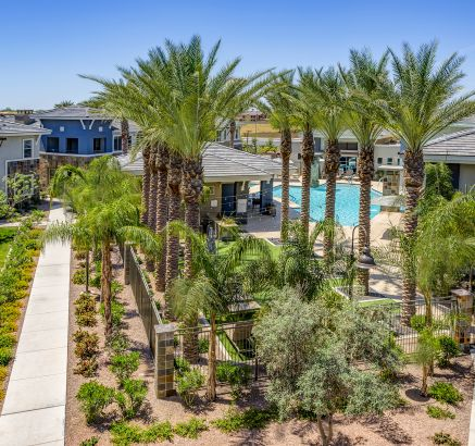 Pool surrounded by Palm Trees at Camden Chandler Apartments in Chandler, AZ