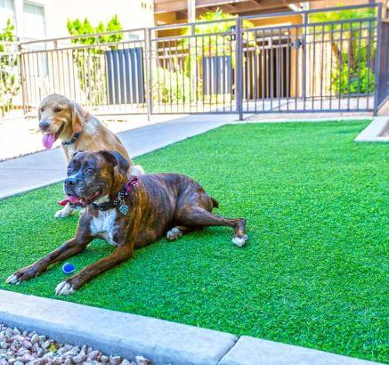 Apartments For Rent In Phoenix Az Camden Copper Square