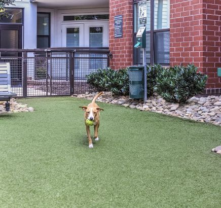 Off-Leash Dog Park at Camden Gallery Apartments in Charlotte, NC