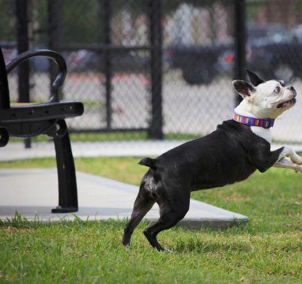 Dog Park at Camden Grand Harbor Apartments in Katy,TX