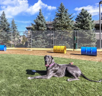 Private Bark Park at Camden Highlands Ridge in Apartments in Highlands Ranch, CO