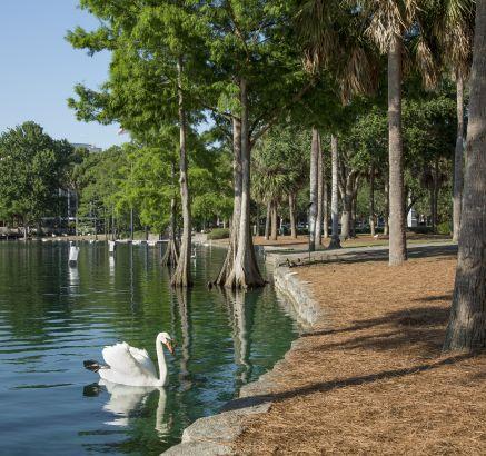 Camden Orange Court Apartments Lake Eola Downtown Orlando, FL Swan