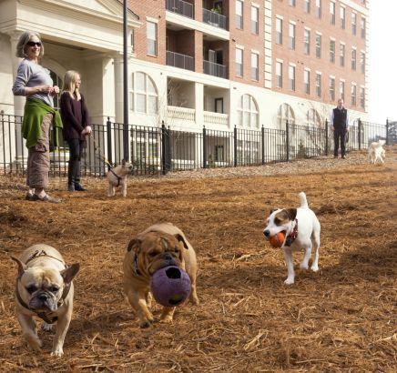 Camden Paces Buckhead Apartments in Atlanta, GA dog park