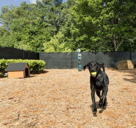 Camden Peachtree City Apartments Dog Park in Peachtree City, GA