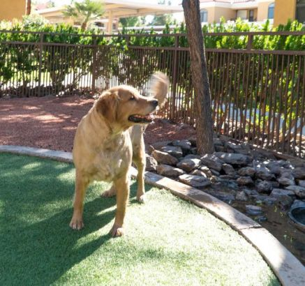 Dog Park at Camden San Paloma Apartments in Scottsdale, AZ