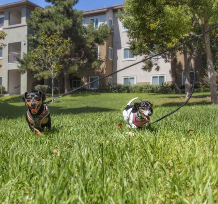 Apartments For Rent In Chula Vista Ca Camden Sierra At