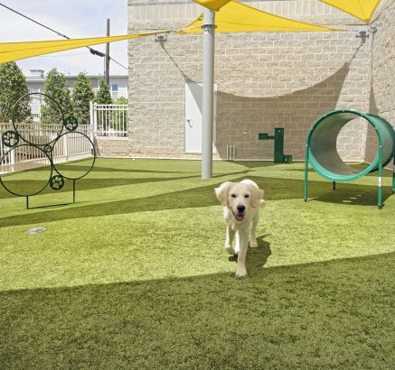 Dog Park at Camden South Capitol Apartments in Washington, DC