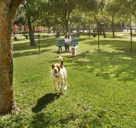 Fenced Dog Park at Camden Sugar Grove Apartments in Stafford, TX