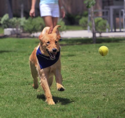 Dog Park at Camden World Gateway Apartments in Orlando, FL
