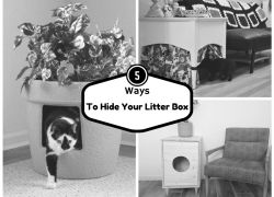 5 Ways to Hide Your Cats Litter Box