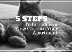 5 Steps to Introduce a New Cat into Your Apartment
