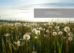 Spring Bucket List In Las Vegas