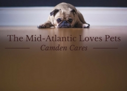 Mid-Atlantic Camden Cares Loves Pets!