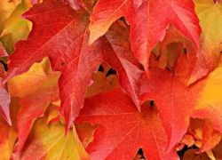 Fall Is Here  - Are You Ready For This Glorious Time Of Year?