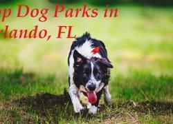 Top Dog Parks in Orlando, Florida