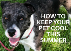 summertime, pets, how to keep pets cool during summer