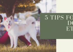 5 Tips for Great Dog Park Etiquette