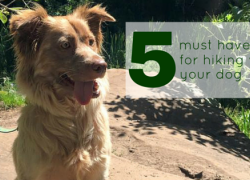5 Must Haves for Hiking with Your Dog
