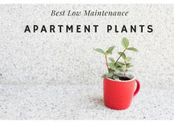 Apartment Home Plants