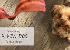 Introducing a New Dog to Your Home