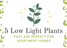 5 Low Light Plants That are Perfect for Apartment Homes