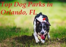 Top Dog Parks in Orlando, Florida
