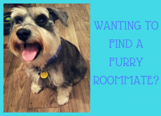 Wanting to find a furry roommate?