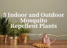5 mosquito repellent plants, mosquito, plants