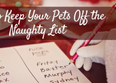 How To Keep Your Pets Off The Naughty List