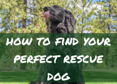 How to find your perfect rescue dog
